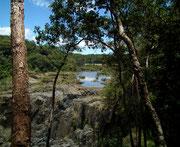 Ein etwas ausgedehnterer Spaziergang durch den Regenwald