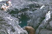 in die wärmenden Felsspalten für ein Nachmittagsschläfchen