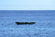 Robben belagern ein Ruderboot zum Sonnenbaden