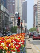 Wunderschöne Blumenbeete und beidseits fahren die Autos . . .