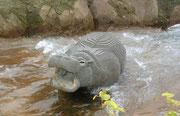 Flusspferd im Fluss
