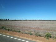 Die Trockenheit und Hitze erkennt man gut auf diesem Bild mit minimaler Vegetation