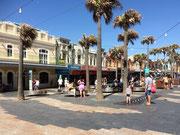 Die Palmen sind gezeichnet von den permanenten Winden in der Bucht von Manly