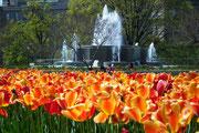 Wasserspiel und Blumenpracht schön vereint