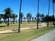 Die herrlichen Palmenparks am Meer