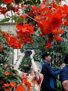 Ja, diese wunderschöne Blumenschaukel ist ein Foto wert