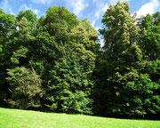 Wunderschöner Baumbestand, der wie auch . . .