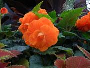 Stolz auf die leuchtende Orangefarbe