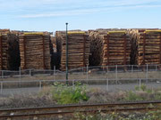 Holz, Holz und nochmals Holz