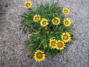 Mindestens die Blumen sehen «sonnig» aus