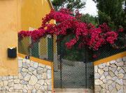 Hübsche Blumenpracht am Villa-Eingang