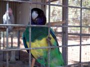 Auch hier wieder ein «Jaguar-grüner» Vogel der uns mit lautem «Singsang» begrüsst