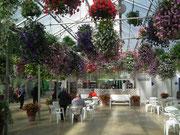 Beim Ausgang gibt es ein hübsch angelegtes Treibhaus-Café