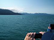 Alle Cameras und Handys in die Höhe: Ein Buckelwal taucht vielleicht auf . . .