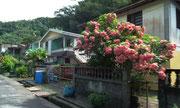 Hübsche Vorgärten in den nobleren Quartieren