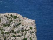 Aussichtspunkte am Kap Formentor für den Blick «nach unten»