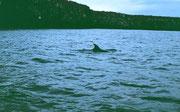 Delfine begleiten unsere Fahrt zurück zur Yacht