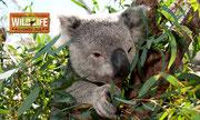 Nun einige Schnappschüsse aus dem «Wild Life Sydney Zoo»