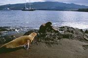 Auch bei diesen wunderschönen Robben gilt selbstverständlich: «Streicheln verboten»