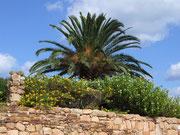 Palmen, der Inbegriff von Ferien für meine Frau