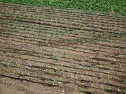 . . . die aber mit endlos langen Wasserleitungen/Schläuchen bewässert werden müssen