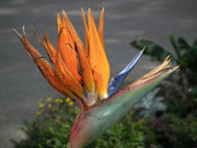 . . . Vielzahl von exotischen Kakteen, Blumen, Pflanzen und Bäumen