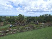 Etwas erhöht ein fantastischer Blick ins üppige «Grün» der Insel