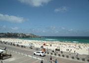 . . . wohl der berühmteste Strand von Sydney mit wunderschönem Sandstrand