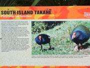 Der «Südinsel Takahë» ist einer der seltensten Vögel auf der Welt