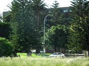 Kaum ein paar Strassen weg vom Hafen wird es wieder herrlich grün