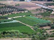 . . . auf bewässerte und fruchtbare Gemüsefelder