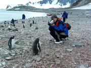 wo wir von «herzigen» Pinguinen begrüsst werden