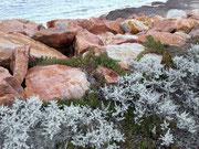 Hübscher Kontrast der weißen Buschpflanzen zu den rot-brauen Felsen