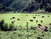 Vieh-Landwirtschaft
