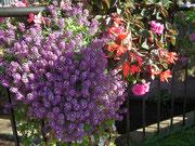 Der Aufwand und die Pflege der Blumen ist ebenso riesig