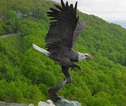 Wunderschöne Nachbildung des amerikanischen Wappentiers. Etwa 1.5 Meter hoch