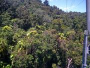 Der Regenwald ist sehr dicht, mit uns unbekannten, Laub- und Nadelbäumen