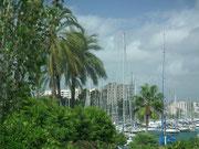 Die unzähligen Motorjachten und Segelschiffe zeugen vom «angeschwemmtem» Reichtum