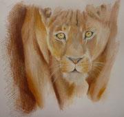 leonessa, pastelli e acquerello su cartoncino, 24x33cm, 100€
