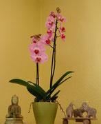 Orchide Wohlfuehlkosmetik.de