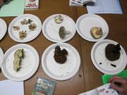 Einige der zu bestimmenden Pilze