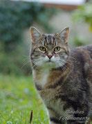 """Unser neuester """"Star"""" ist """"Missy"""", eine wunderschöne, 10-jährige Hauskatze."""