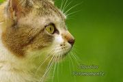 Die Hauskatze Sally...überaus hübsch und fotogen!