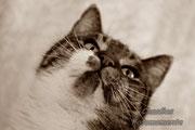 Katzen sind wunderbar...