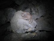 Un rospo chissaccome arrivato fino a 25 metri sottoterra