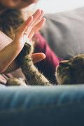 mobile Katzenbetreuung