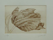 Tulpe klein