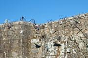 Spinnen am Eingang zum Castelo
