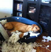 Fumba aime son lit