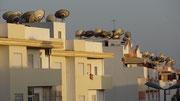 Forêt de paraboles sur les toits des immeubles